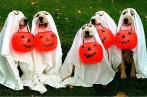 4-halloween-dogs